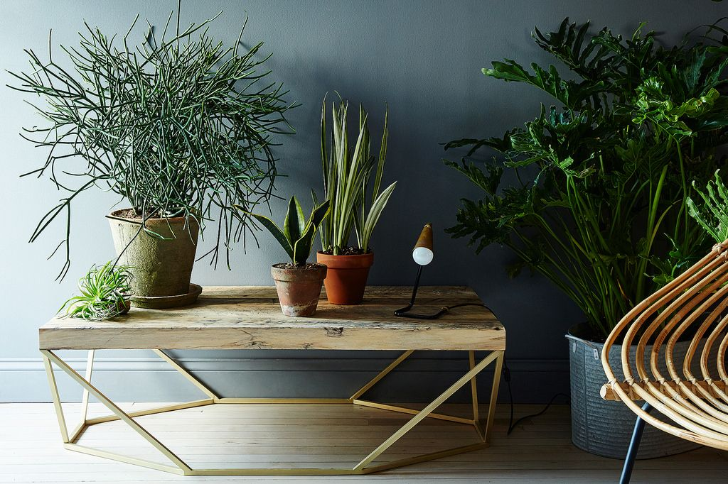Indoor Office Plant Services by Foliage Design Systems of Dallas, Texas