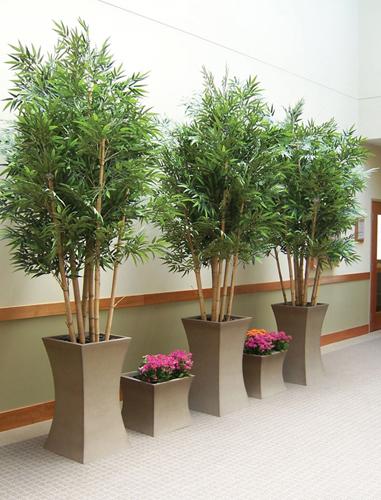 Living Plant Rental Dallas, Tx