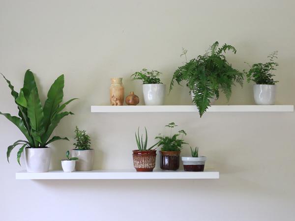 Indoor Office Plants in Dallas, Texas