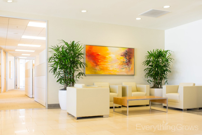 Rhapis Palm Interior Plant Rental Foliage Design Systems Dallas