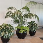 Lobby Plants by Foliage Design Systems of Dallas, Texas