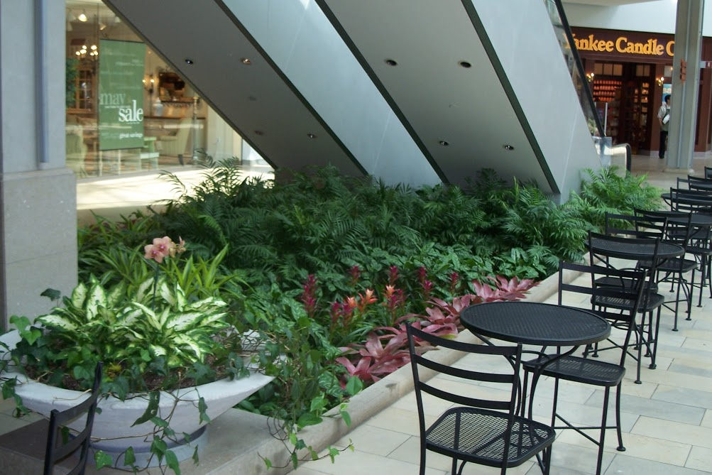 Mall Plant Design by Foliage Design Systems in Lewisville TX