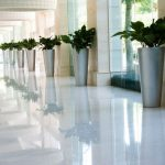 interior plant design garland tx