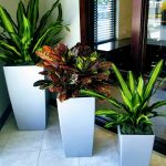Office Plant Rental Service