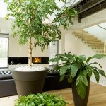 indoor plant rentals garland texas