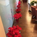 Office Plant Decorations for Christmas Dallas Fort Worth
