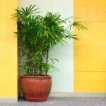 The Best Indoor Plants for Your Office