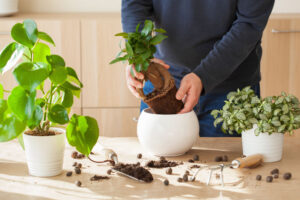 3 Basic Tips to Keep Your Indoor Plants Alive