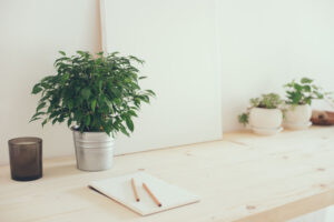 How Plants Increase Workplace Productivity